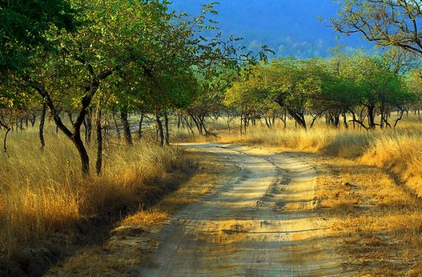 Jungles of Panna
