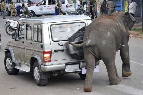 Elephant on the loose in Indian state of Karnataka. Photo: AFP/Getty images