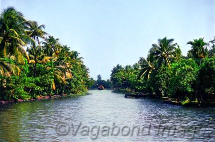 Majestically beautiful backwaters