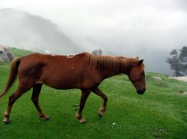 Ponies at the top help trekkers and locals alike