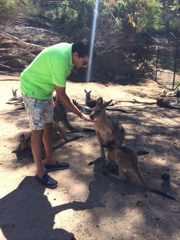 Sanjeev Kapoor feeding kangaroos at Currumbin Wildlife Sanctuary , Gold Coast, Australia
