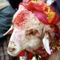 Nanda Devi Rajjaat Yatra festivities begin