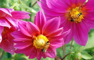 Nectar time!