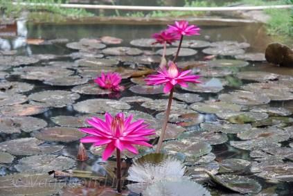 Kairali-Beauty2