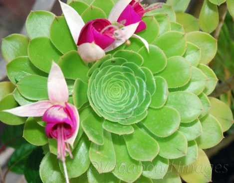 Kausani-Flowers2