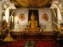 Tooth Relic12