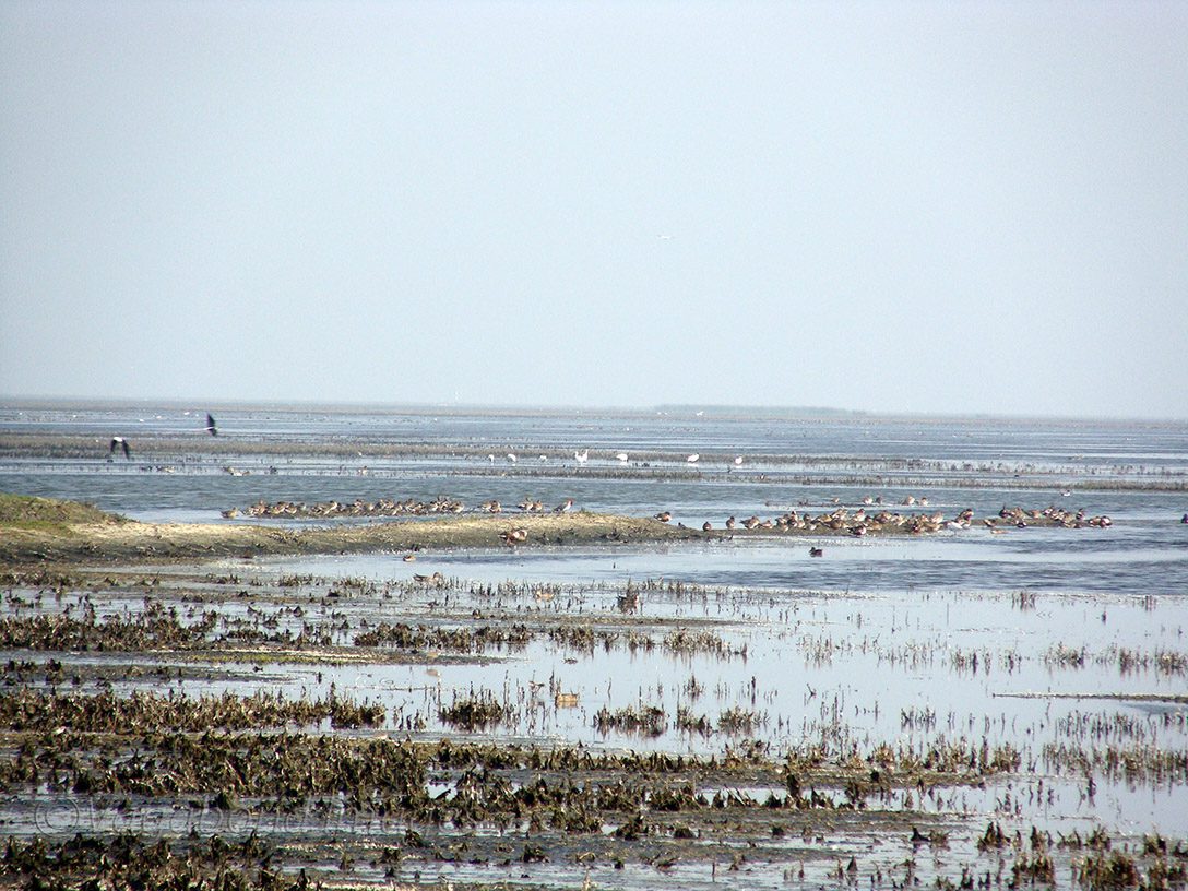Everywhere around, you can find a colony of migratory birds