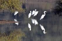 Sariska Birds24