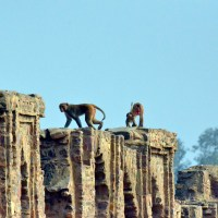 Haunted fort of Bhangarh : Nothing spooky about it!
