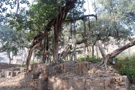 Hotspots for some spine-chilling stories are trees like this in Hindu mythology.