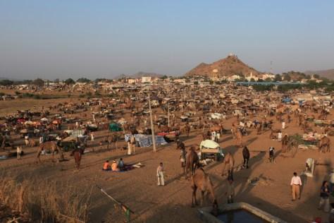 Nagaur Fair