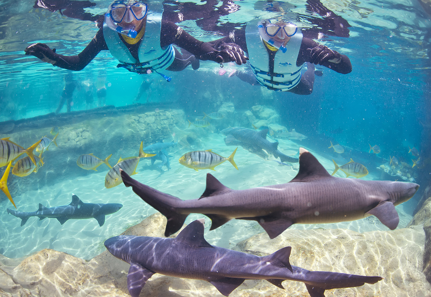 Swim with sharks and feed the stingrays! | Vagabond Images