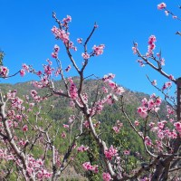 Its spring time and lower Himalayas are laden with beauty!
