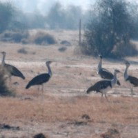 Desert National Park | For that Bustard feeling