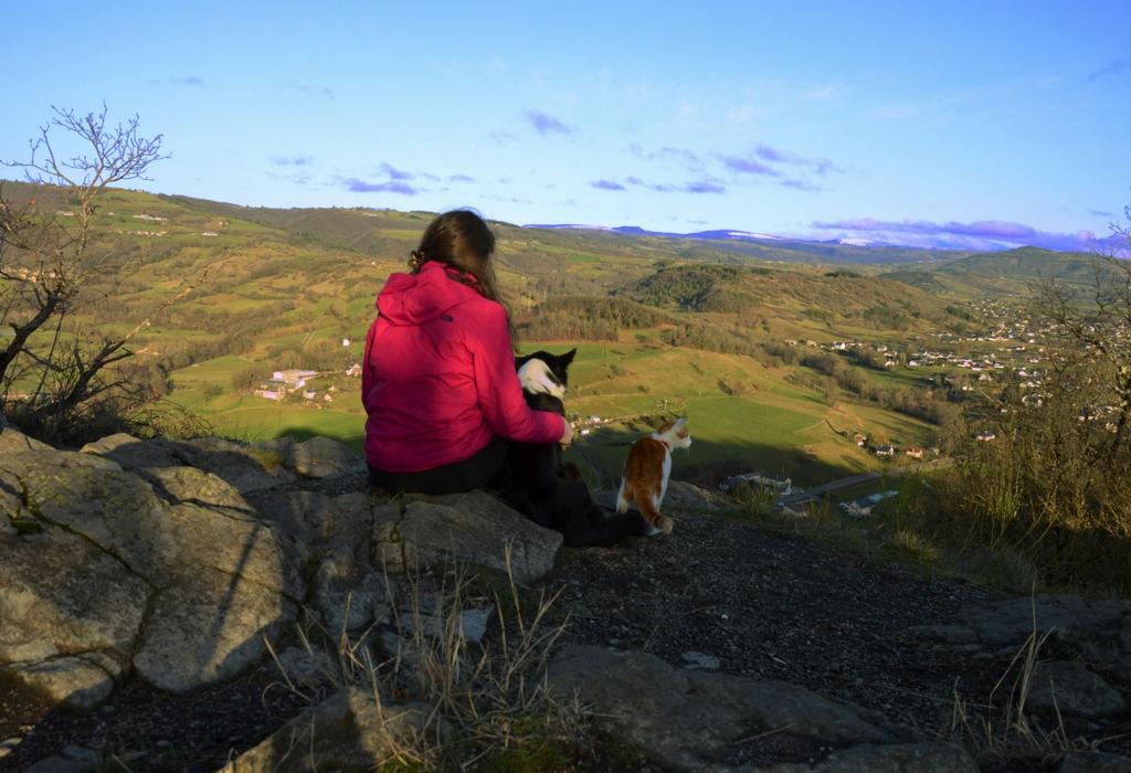Aménager ma voiture et partir sur les routes d'Europe avec mon chien… Je relève le défi !
