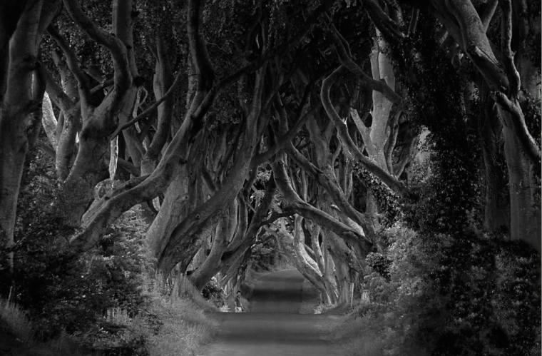 Dark Hedges, un lugar icónico que también aparece en Juego de Tronos