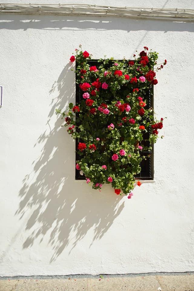 En el barrio de San Basilio de Córdoba todas las ventanas están llenas de flores y macetas