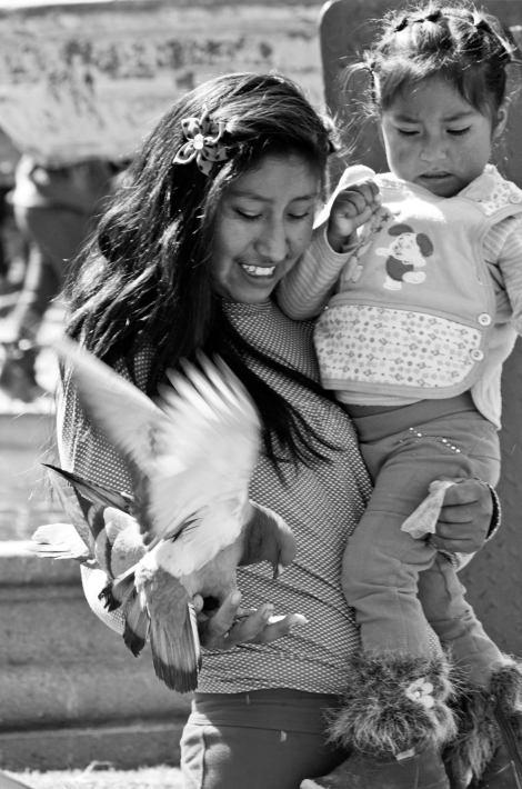 Palomas y peruanos comparten la Plaza de Armas de Arequipa a partes iguales