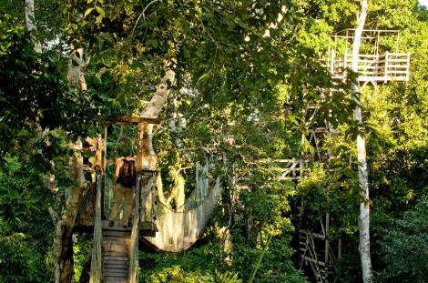 Paseo por puentes entre las copas de los árboles