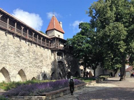 Uno de los tramos de la muralla medieval de Tallín mejor conservado está en el acceso desde la Ciudad Vieja a la colina de Toompea
