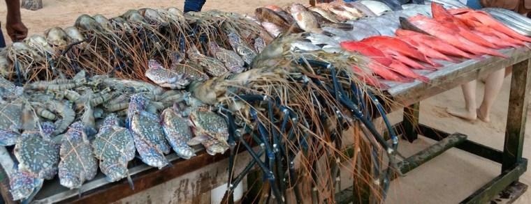 Hora de la cena en Mirissa: escoge tu pez y que te lo cocinen