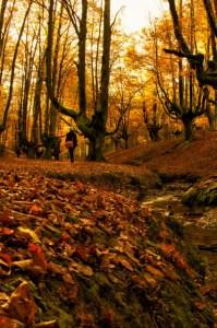 La belleza del hayedo de Otzarreta es un secreto a voces, con lo que encontrarás muchos más visitantes como tú