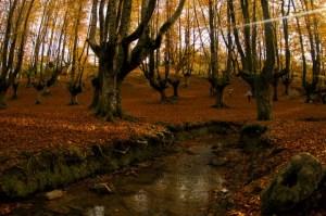 El río Zubizabala es la guinda que corona este magnífico hayedo de Otzarreta, Euskadi