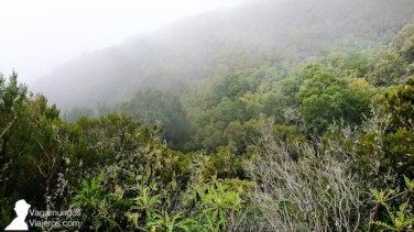 Parque Nacional Garajonay en La Gomera