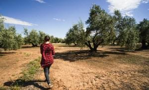 Paseando por el campo de olivos que rodea Baños de la Encina en Jaén