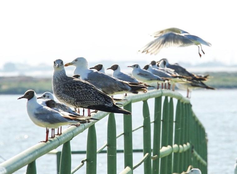 Doñana, por sus marismas y humedales, supone un importantísimo refugio para multitud de especies de aves