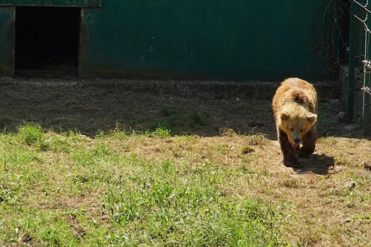 Los cercados oseros de la Fundación Oso de Asturias que encuentras en la Senda del Oso
