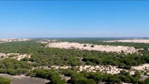 Las dunas son uno de los ecosistemas que puedes ver en el Parque nacional de Doñana