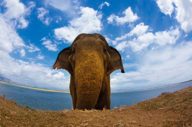Elefante en el Parque Udawalawe en Sri Lanka