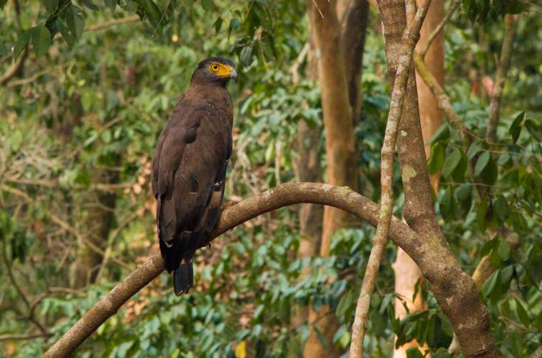 Águila en el Parque Nacional Wilpattu, en Sri Lanka