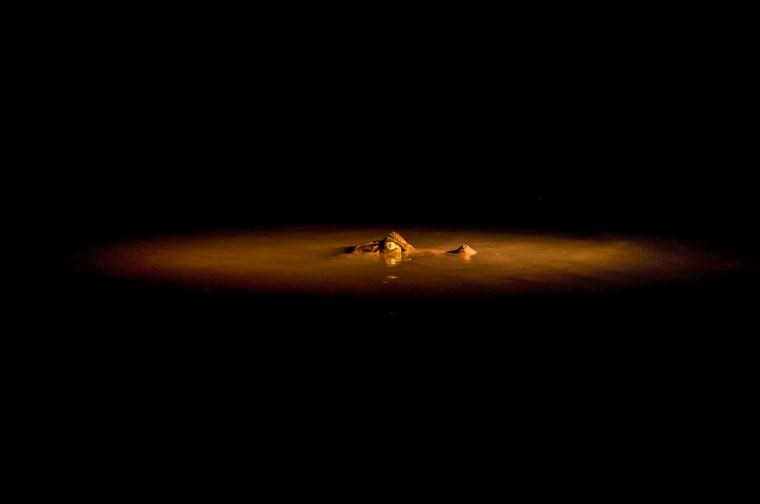 El caimán blanco, vista nocturna en el Amazonas del Perú
