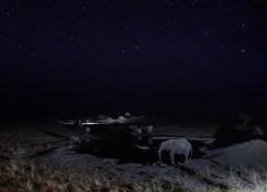 Desfile nocturno de elefantes en la charca del Thobolo's Lodge, Botswana