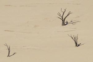 Las acacias muertas de Deadvlei, vistas desde la duna Big Daddy, en el desierto de Namib