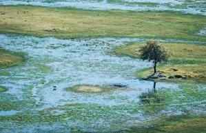 Un antílope en el delta del Okavango en Botswana, visto desde el sobrevuelo en avioneta