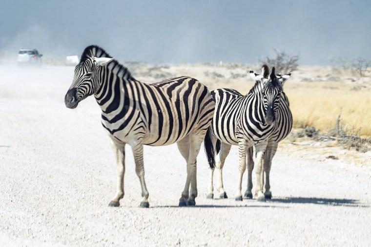 Carretera sin asfaltar y con animales en el Parque Etosha, Namibia