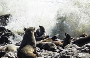 La colonia de leones marinos de Cape Cross en Namibia