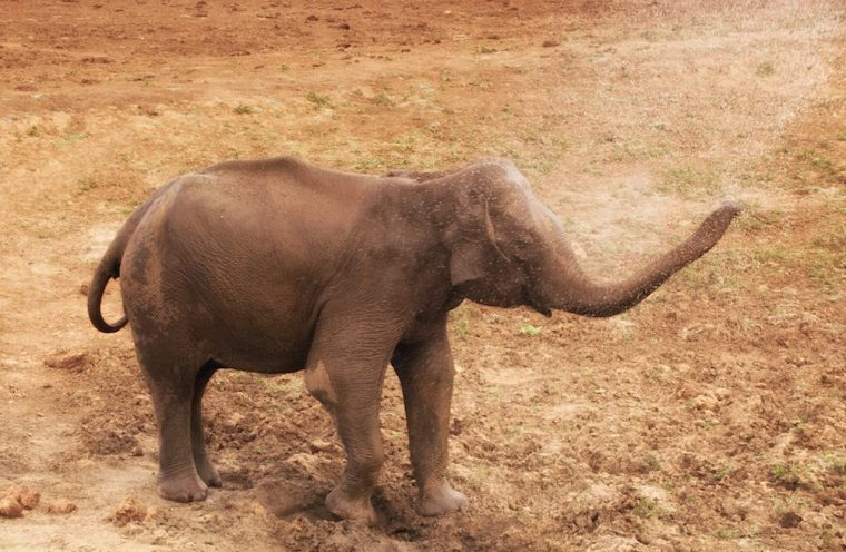 Elefante duchándose en el Parque Nacional Udawalawe, Sri Lanka