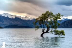 El solitario árbol en medio del lago Wanaka, en Nueva Zelanda