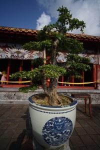Bonsai en la Ciudad Imperial de Hue