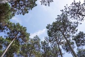 Ohai Nazaré está en el bosque del Parque Nacional de Leira