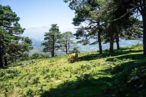 El inicio de la ruta al Pico Pienzu pasa por una arboleda en la sierra del Sueve