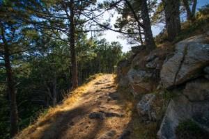 Sendero atravesando los bosques de las islas Cíes