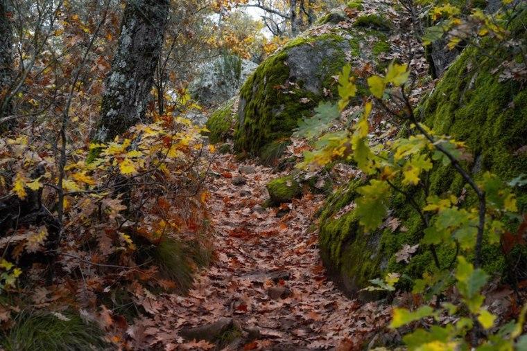Hojas cubriendo el desvío hacia el parking del Bosque de la Herrería, El Escorial