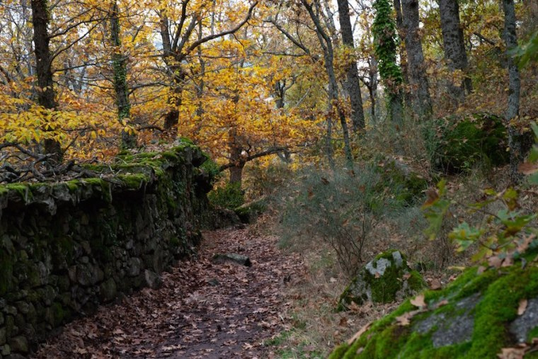 Desvío hacia el parking del Bosque de la Herrería, El Escorial