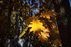 Detalle de hojas vistas en otoño en la Sierra del Rincón de Madrid