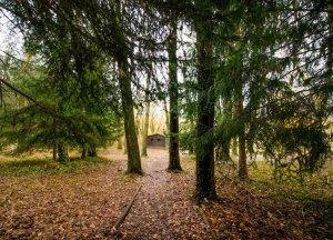 Cabaña de madera en el Bosque Finlandés, Rascafría